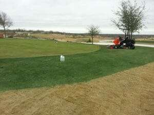 wintergreen painted bermuda zoysia NG Turf golf
