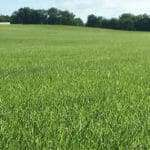 NG Turf Isn't Your Ordinary Sod Company