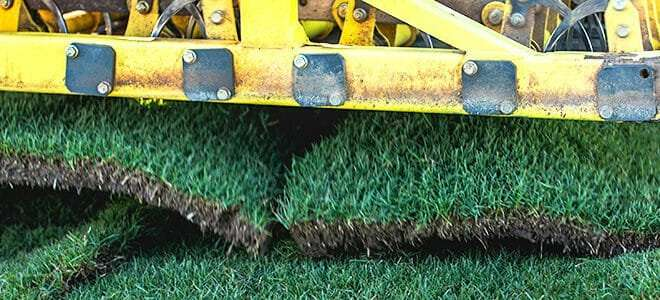 Why NG Turf Sod is A Cut Above