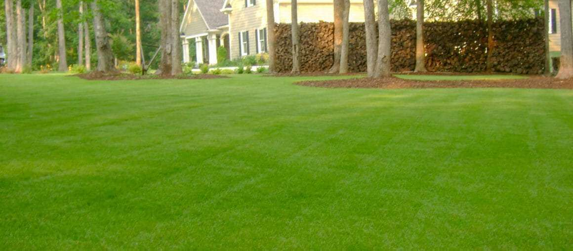 Helping You Grow the Best Zoysia You Can