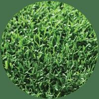 zoysia sod close up, northern georiga