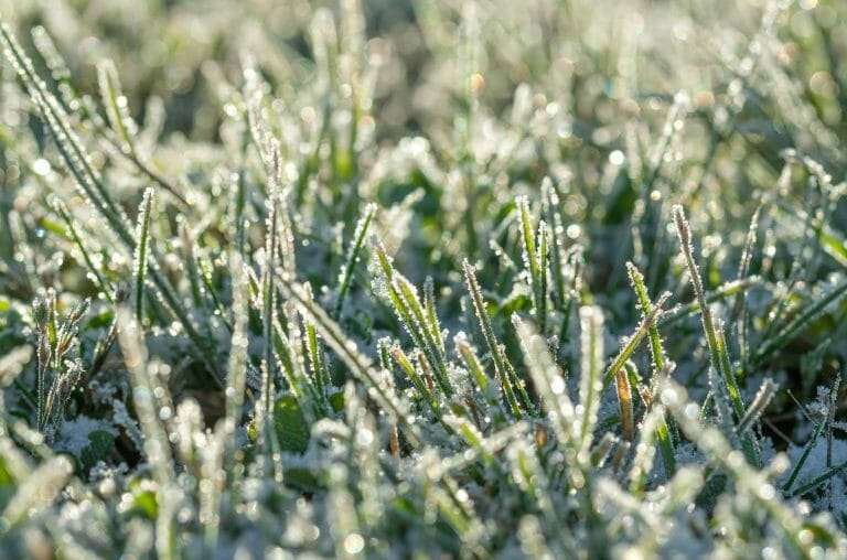 How to Protect Your Lawn From Spring Frost
