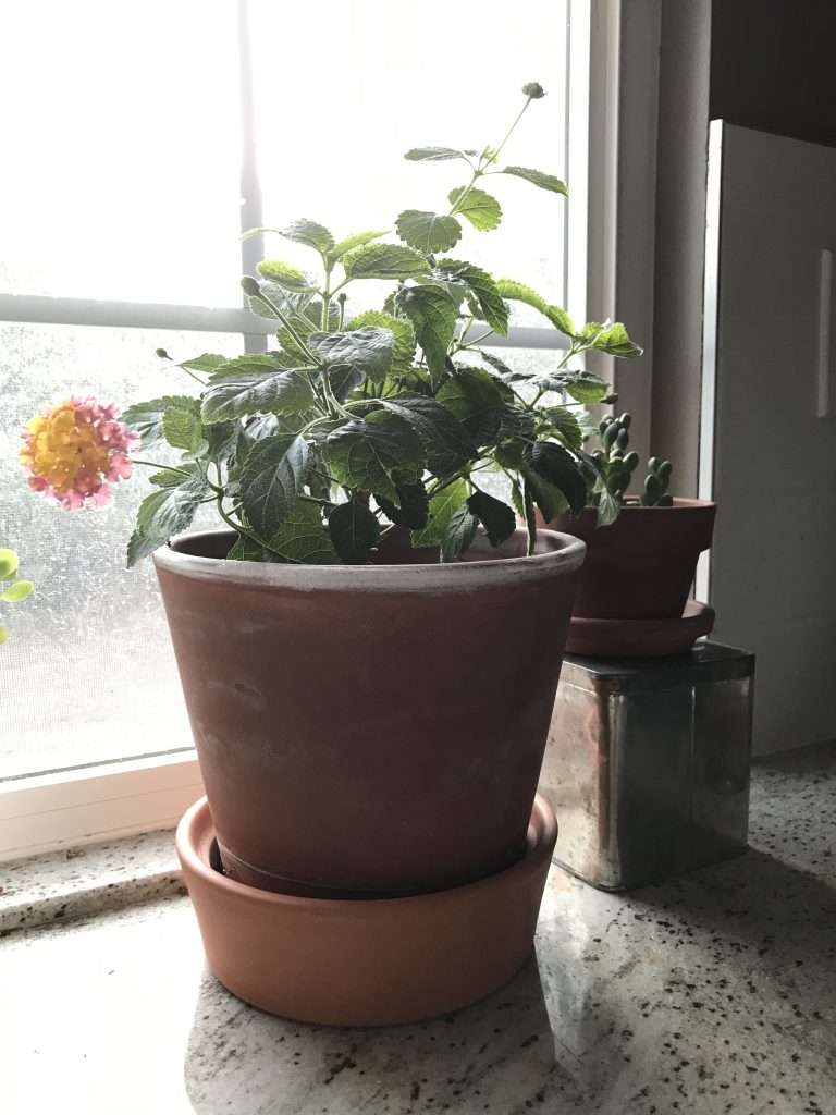 potted plant sitting inside on window sill, spring frost