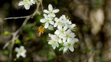 The Buzz About Pollinators