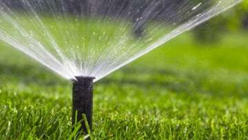 Save BIG on Irrigation Costs with TifTuf™ Bermuda