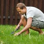 Fight Weeds Naturally With These Eco Weed Control Tips From NG Turf