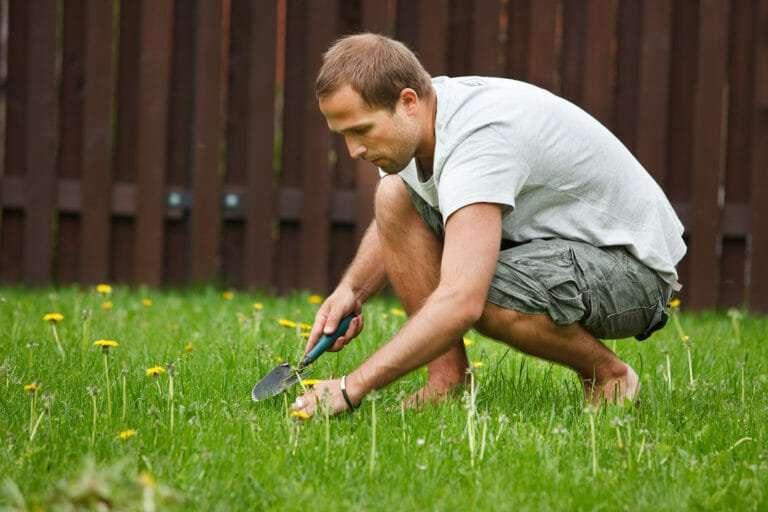 environmentally friendly weed control NG Turf