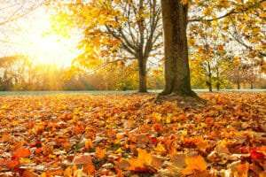 tree surrounded by colorful fall leaves