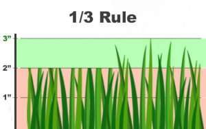 1/3 rule of cutting grass