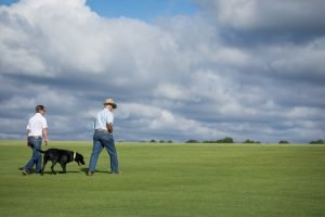 owners of NG Turf farm walking through Fram fresh sod field with black lab
