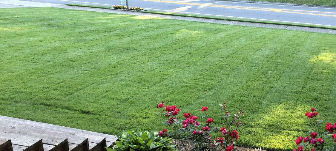 The Advantages of Certified Sod