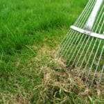 Is Thatch Chocking Your Lawn?