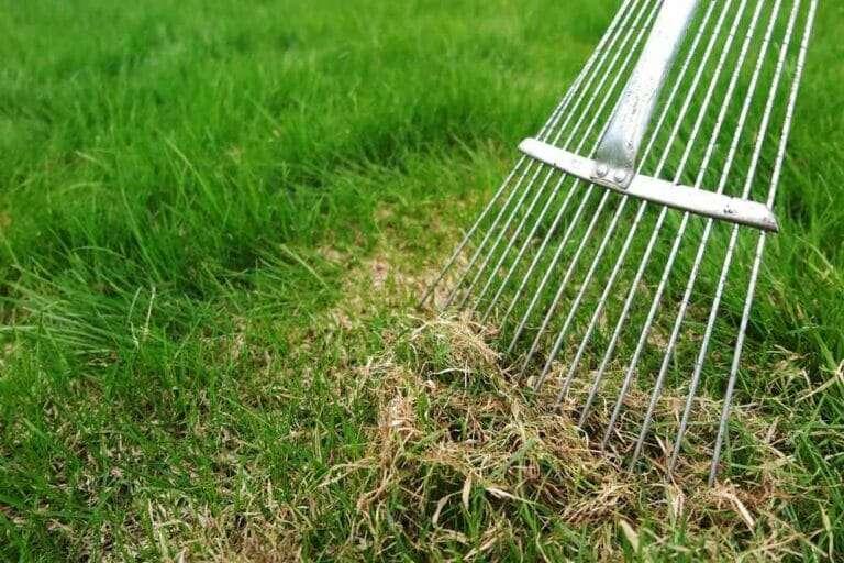 dethatching rake, dethatching lawn