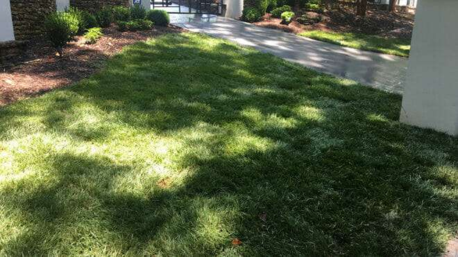 Go Green Year-Round with Fescue