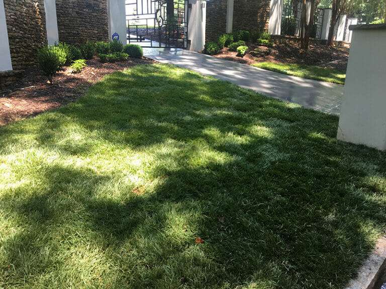 front lawn of house with shade tolerant sod