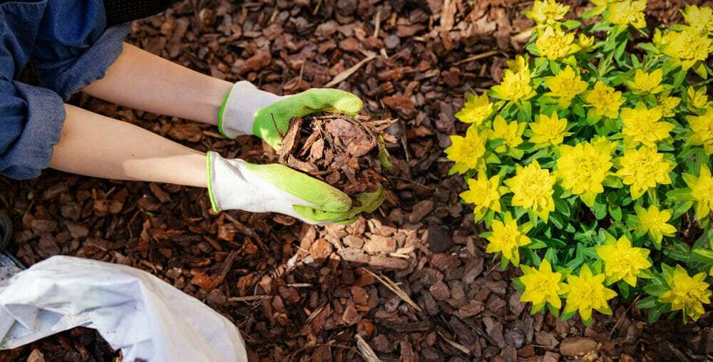 Top Six Mulch Mistakes