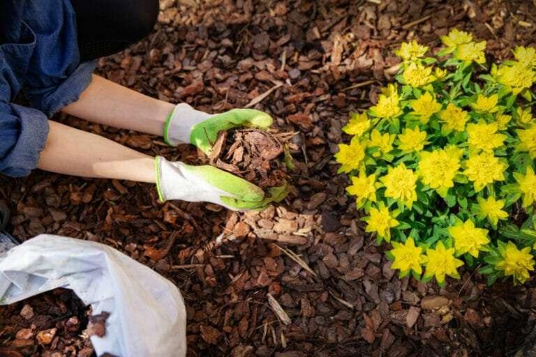 women with gardening gloves on putting down mulch in flower bed