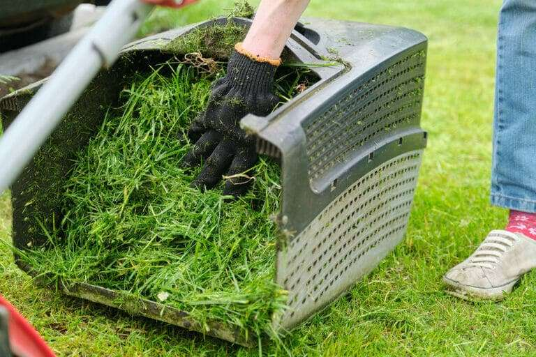 lawn clippings in lawn mower container, compost lawn clippings