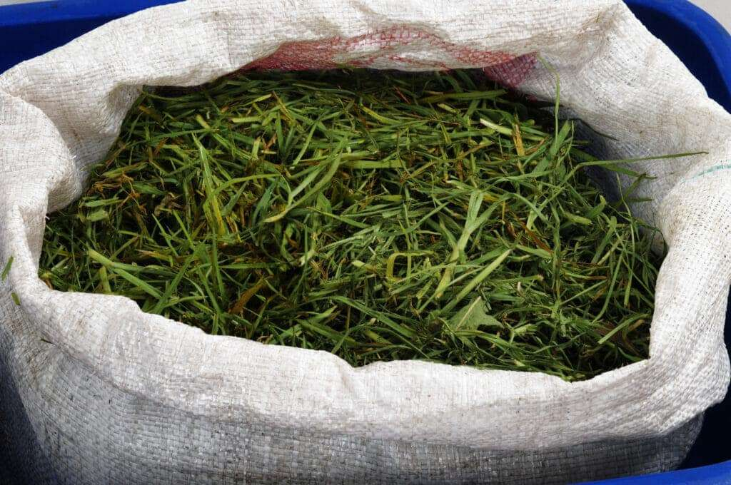 grass clippings in canvas bag to be compsted