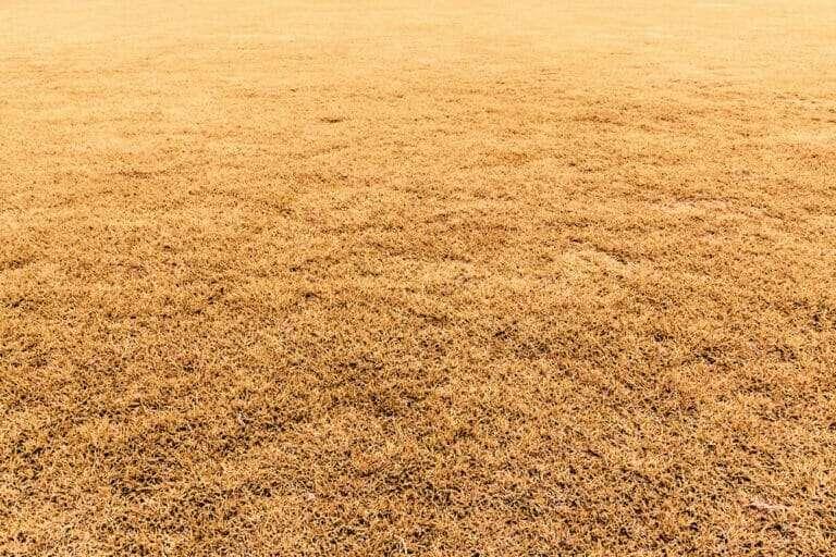 installing dormant sod in winter