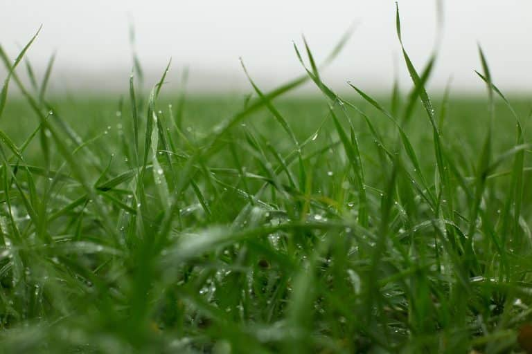 close up of soggy grass