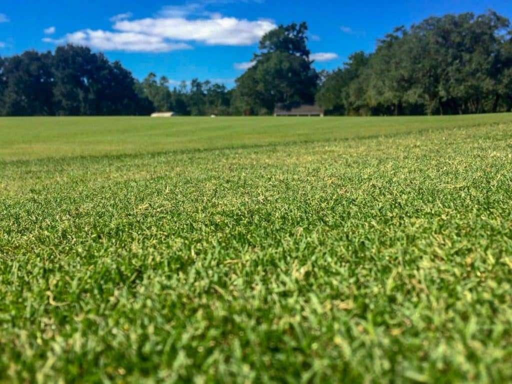 field of dark green TifGrand Bermuda sod