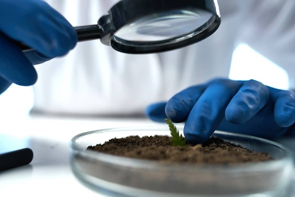 gloved hand with magnifying glass looking at soil, soil test concept