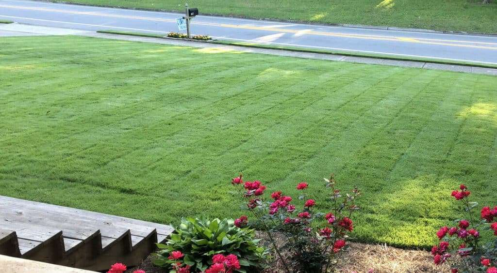 view of front lawn of certified sod with steps and flowers