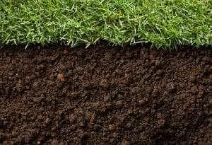 grass and soil comparison