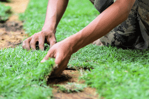 hands laying new variety of farm fresh sod