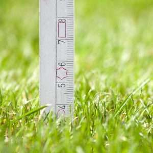 mowing height on grass