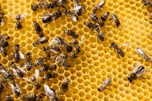 bee colony on honeycomb