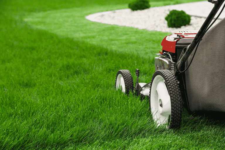 push mower cutting lawn, mowing mistakes concept