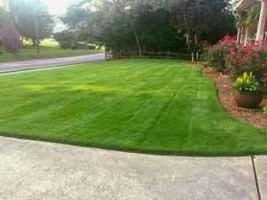 Zoysia Marvel grass in front yard