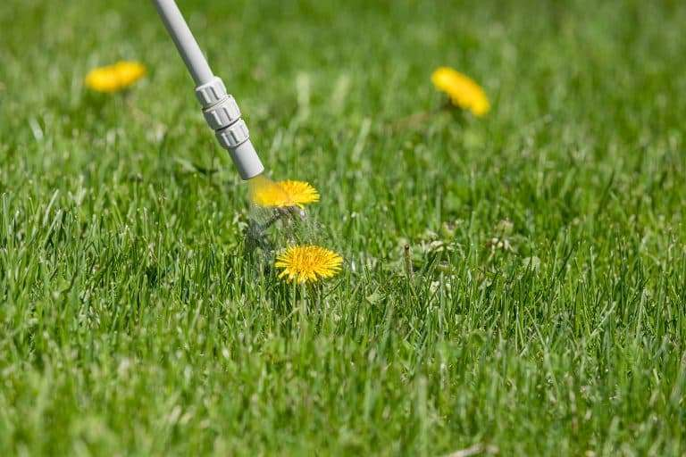 Pre-emergent being sprayed on weeds