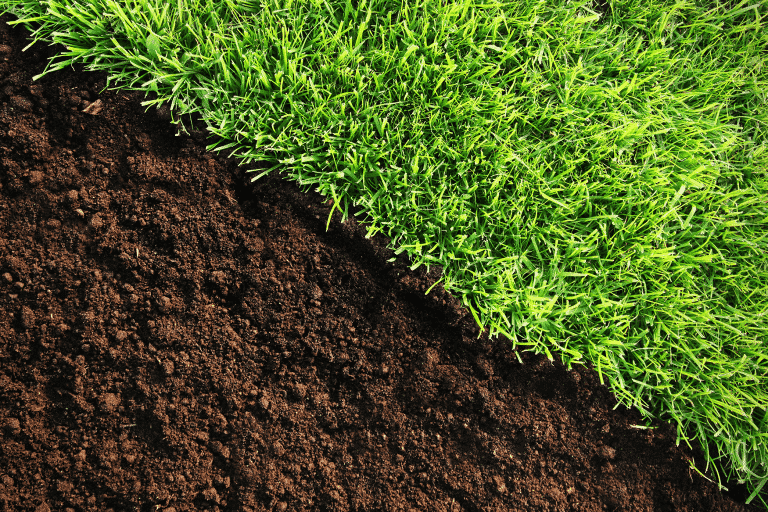Growing Grass in All Soil Types