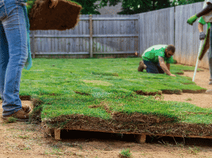 team of sod professionals installing green sod in fenced in backyard in fall Successfully Installing Sod in the Fall