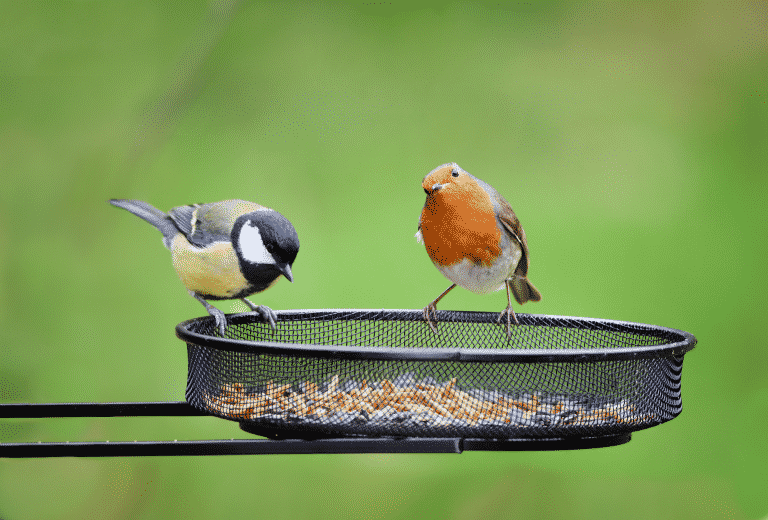 Get Rid of Birdseed in Your Lawn