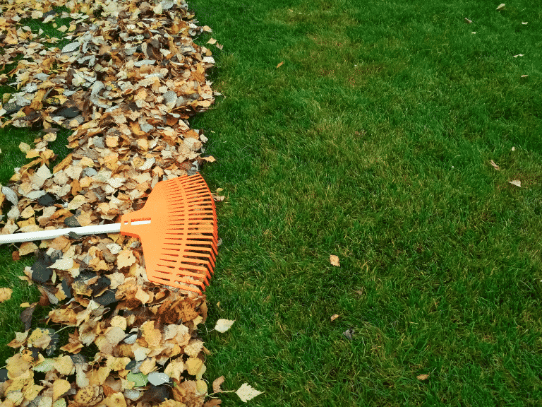 rake leaves in lawn