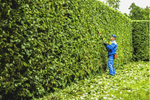 lawn service providers trimming hedges