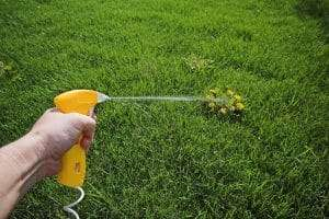 hand spraying pre-emergent herbicide on weeds