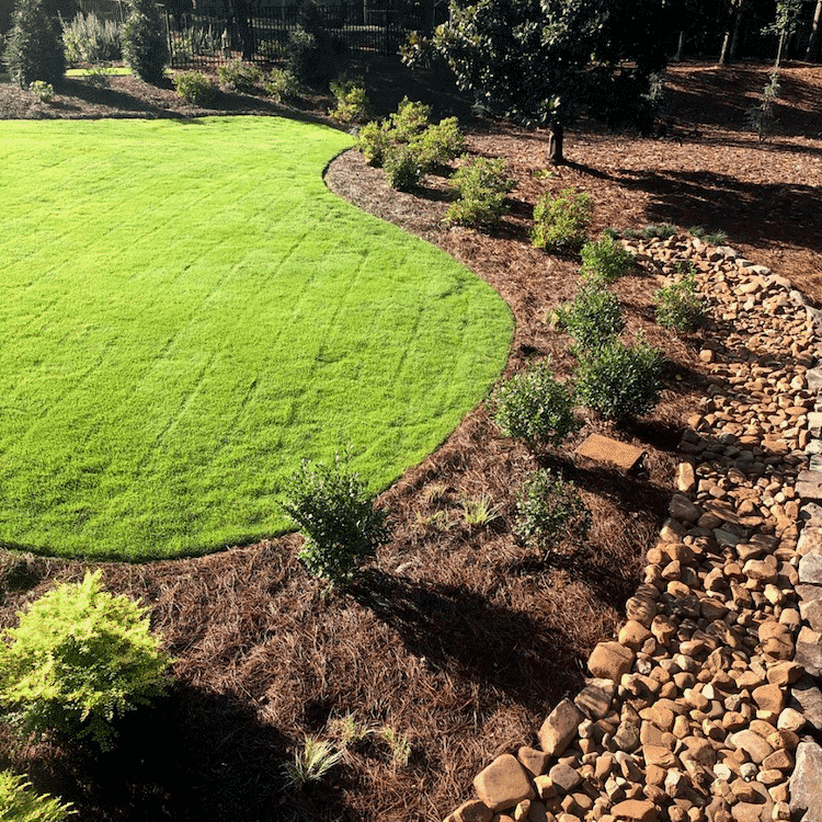 freshly laid lawn of zoysia sod