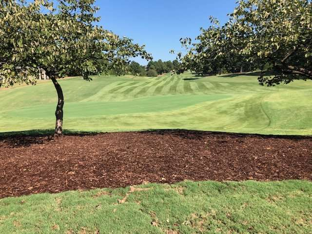 sugarloaf golf course in Duluth, GA fairway sodded with zeon zoysia