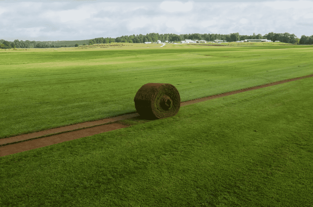roll of freshly harvested sod from NG Turf