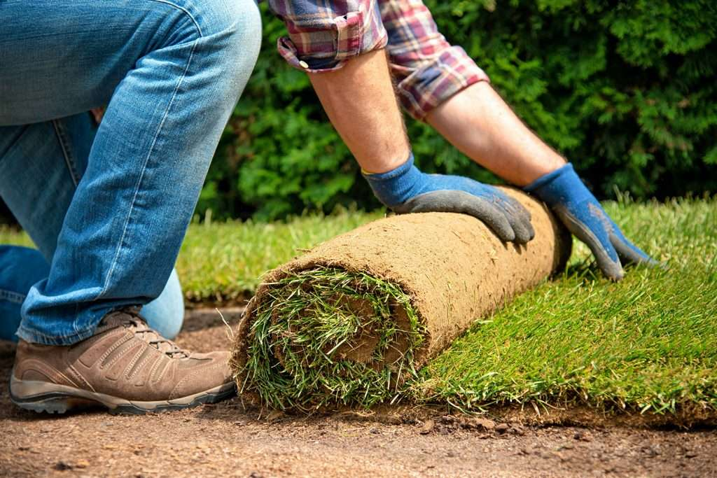 man laying fresh sod rolls, increase in home improvement projects during pandemic concept