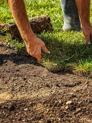 man installing sod on lawn