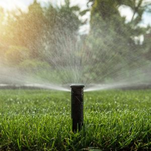 sprinkler watering lawn in morning, efficient lawn watering for healthy lawns