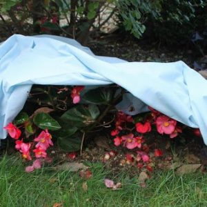 outdoor plants covered by sheet to protect from spring frost